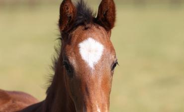 Foal by Jamhoori