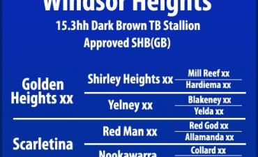 Windsor Heights Pedigree